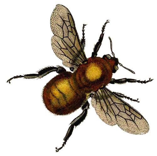 vintage honey bee