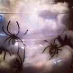 Spiders in Jar